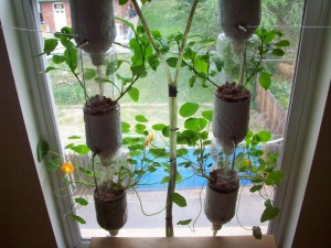 Indoor Window Herb Garden Ideas