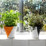Indoor Windowsill Herb Garden
