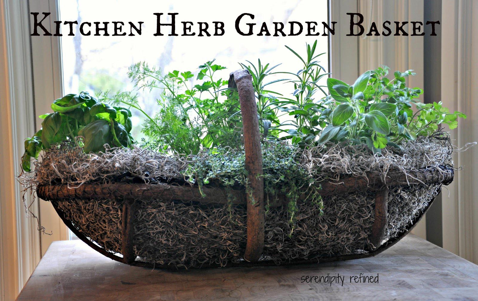 Kitchen Herb Garden Containers