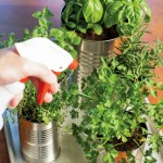 Kitchen Herb Garden DIY