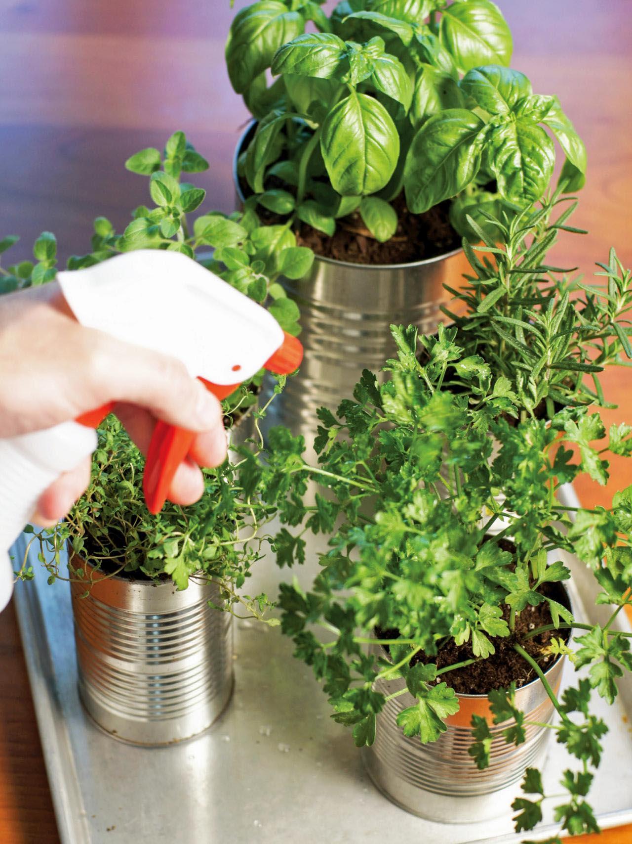 Kitchen Herb Garden DIY