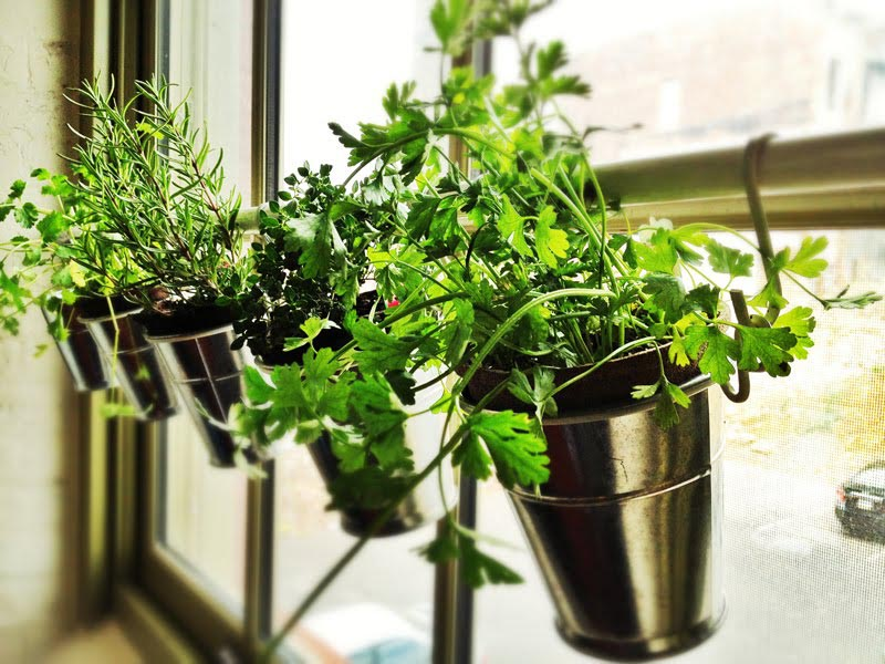 Kitchen Herb Garden Ideas
