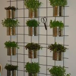Kitchen Herb Garden Wall