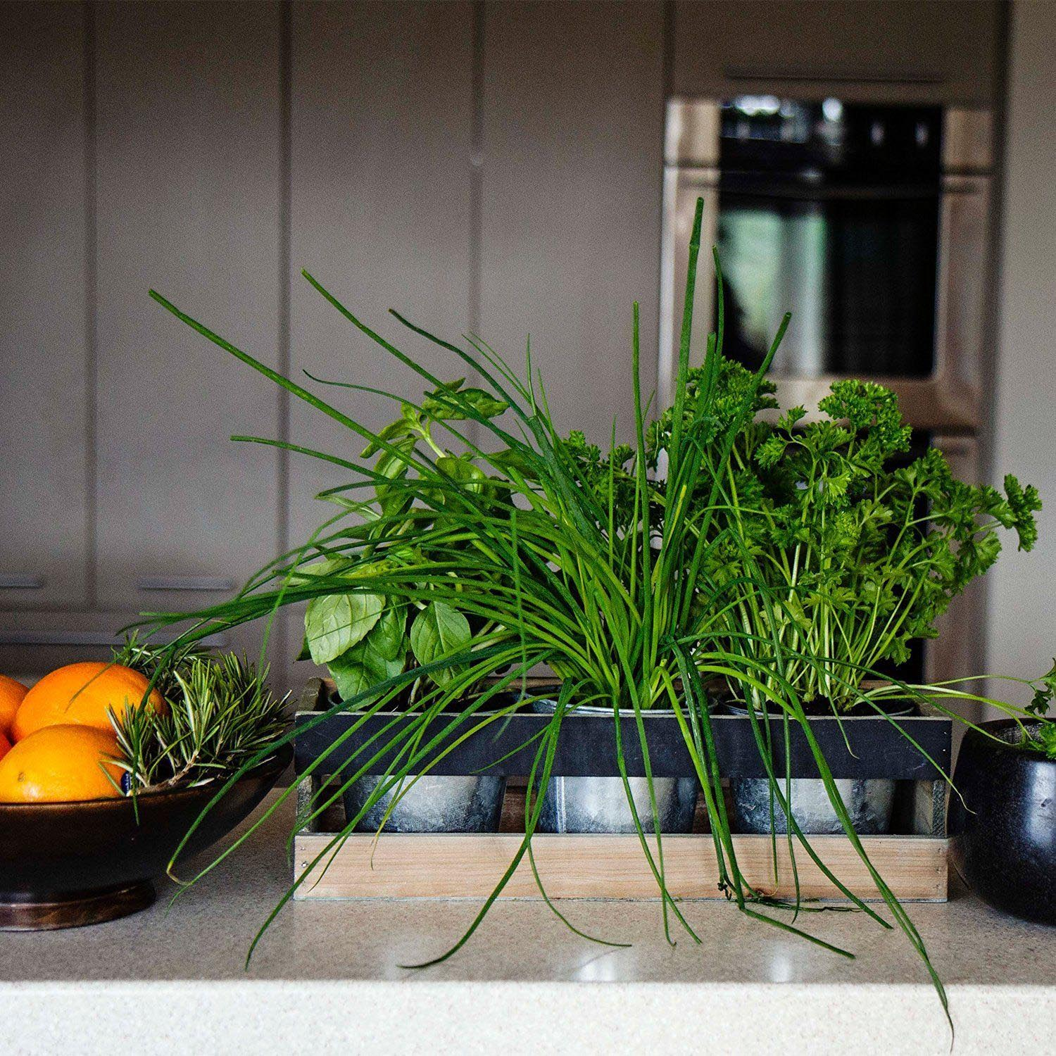 Kitchen herb garden windowsill planter garden design ideas Kitchen windowsill herb pots