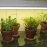 Kitchen Herb Garden with Light