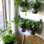 Kitchen Window Hanging Herb Garden