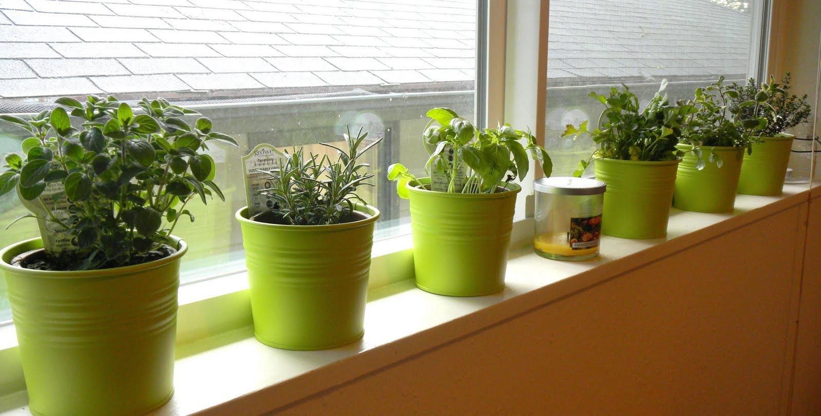 Kitchen Window Herb Garden Kit Garden Design Ideas