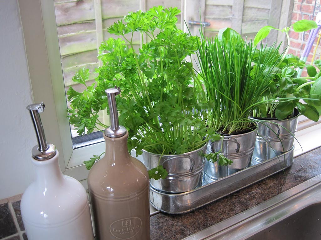 Kitchen Window Herb Garden Kit