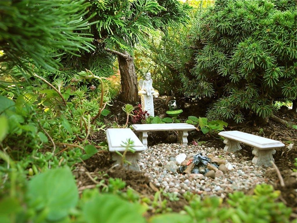 Live Miniature Trees for Fairy Gardens