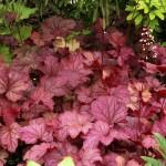 Long Blooming Part Shade Perennials
