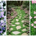 Long Blooming Perennial Ground Cover
