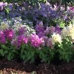 Low Maintenance Annual Plants