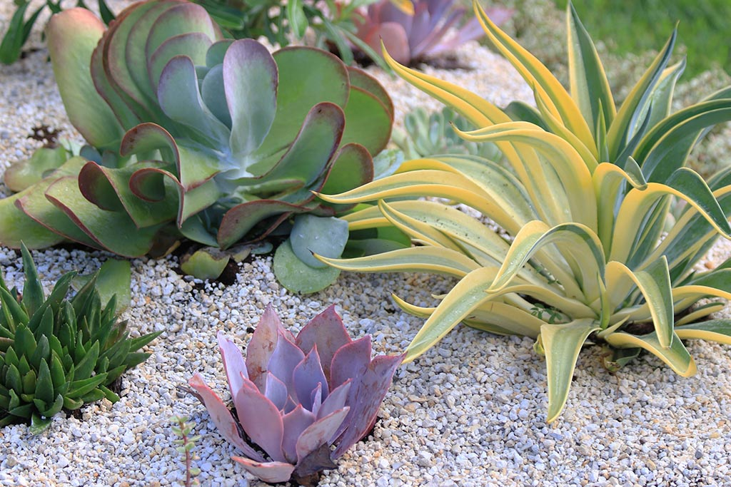 Low Maintenance Desert Plants