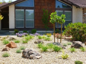 Low Maintenance Front Yard Low Mainlow Maintenance Front Yard Plants
