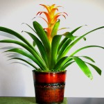 Low Maintenance Indoor Flowering Plants