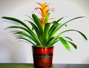 Low Maintenance Indoor Flowering Plants
