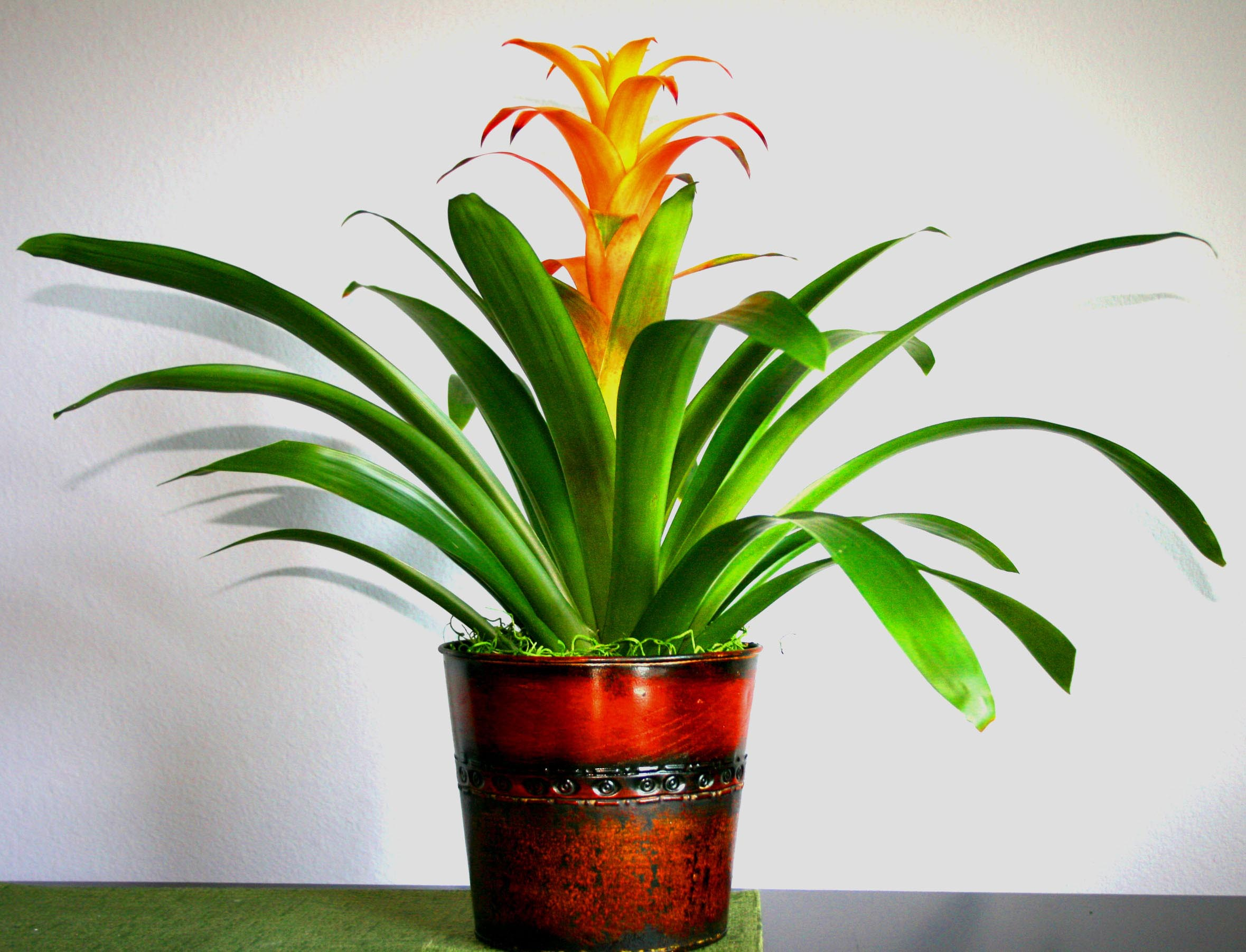 Low maintenance indoor flowering plants garden design ideas for Flowering plants for indoors