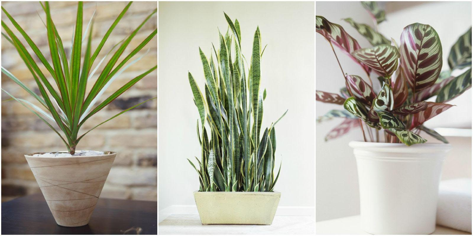 Low Maintenance Indoor Plants Home