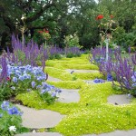 Low Maintenance Lawn Plants