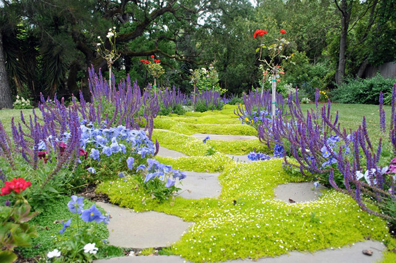Low Maintenance Lawn Plants