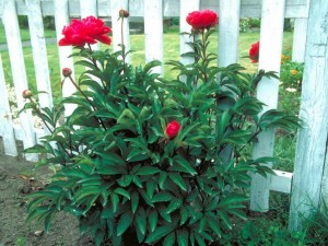 Low Maintenance Outdoor Flowers and Plants