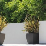 Low Maintenance Plants for Pots