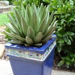 Low Maintenance Plants for Pots Outdoors