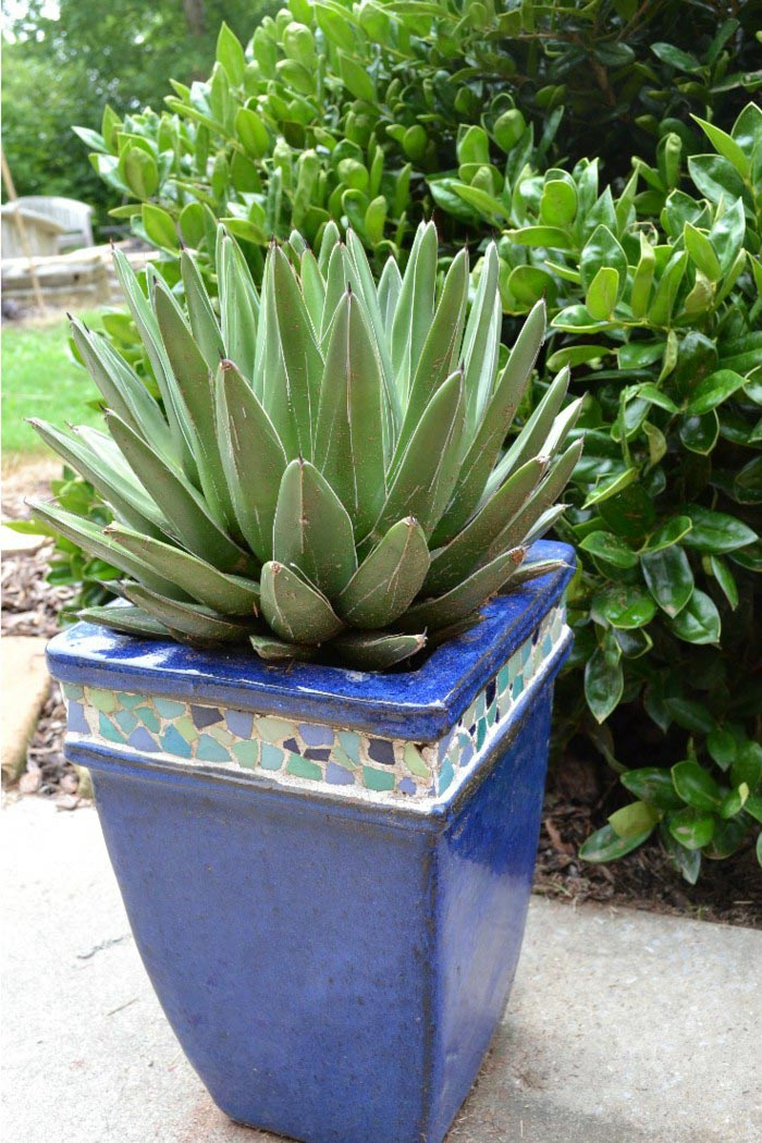 Low Maintenance Plants for Pots Outdoors