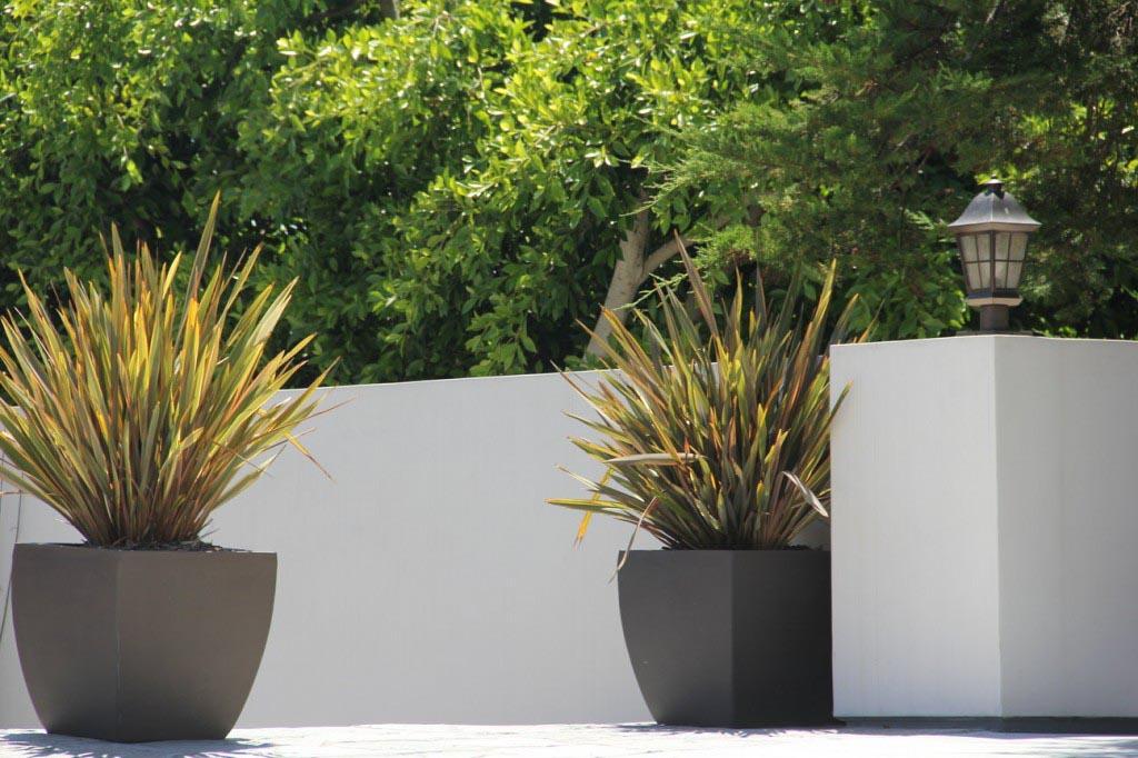 Low Maintenance Plants for Pots