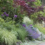 Low Maintenance Plants for Steep Slopes
