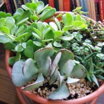 Low Maintenance Small Indoor Plants