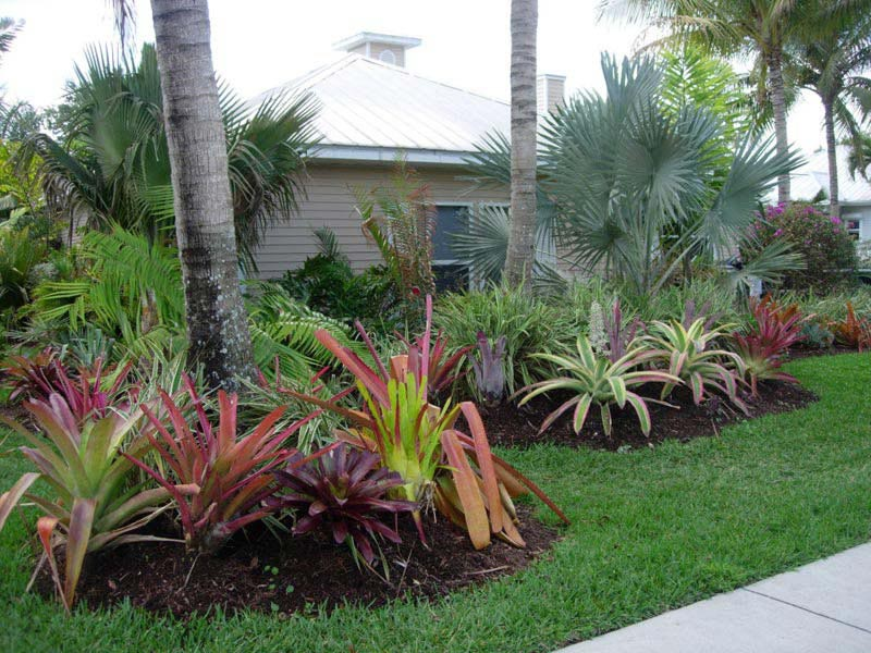 Low Maintenance Tropical Plants