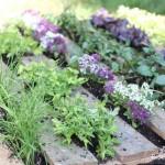 Making a Herb Garden from a Pallet