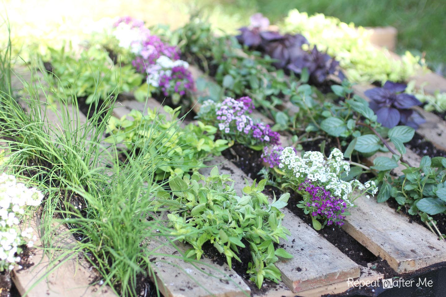 Making a Herb Garden from a Pallet