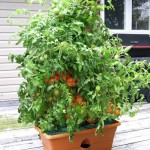Making a Patio Herb Garden