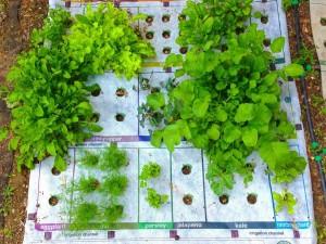 Making a Small Herb Garden