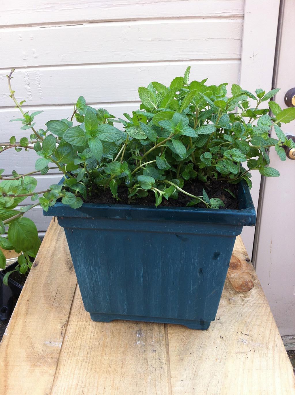 Making an Herb Garden Box