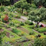 Medicinal Herb Garden Planner