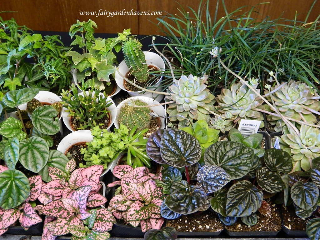 Miniature Fairy Garden Plants