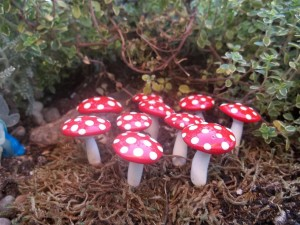 Miniature Mushrooms for Fairy Gardens