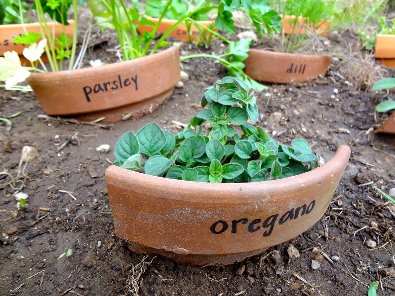 One Pot Herb Garden