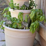 One Pot Outdoor Herb Garden