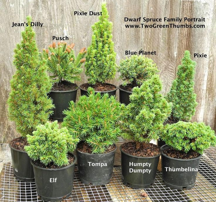 Outdoor Fairy Garden Plants