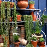 Outdoor Herb Garden Rack