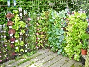 Patio Herb Garden Planters