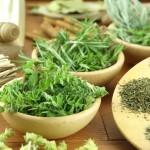 Patio Herb Garden Plants