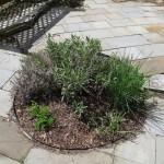 Patio Herb Garden Tips