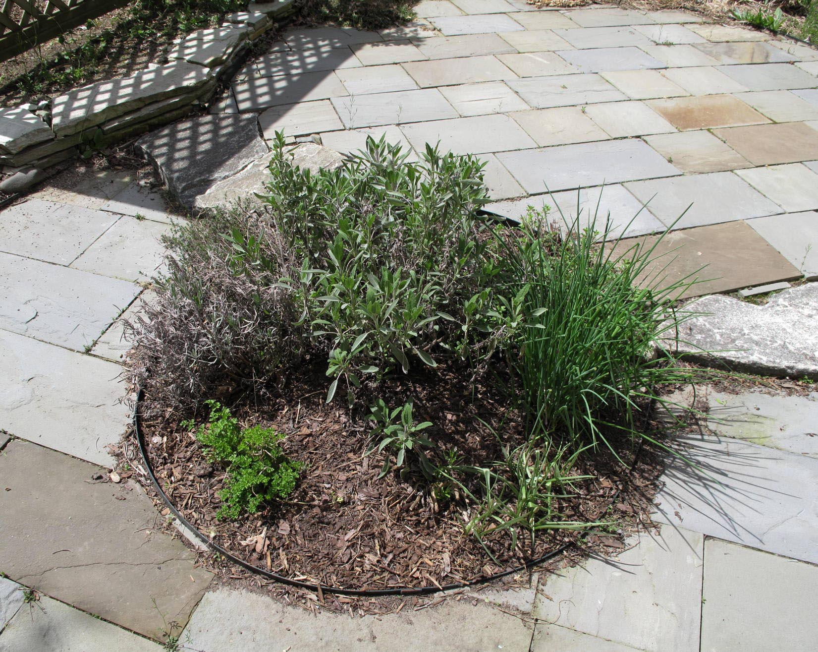 Patio Herb Garden Tips