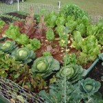 Patio Vegetable Garden Plans