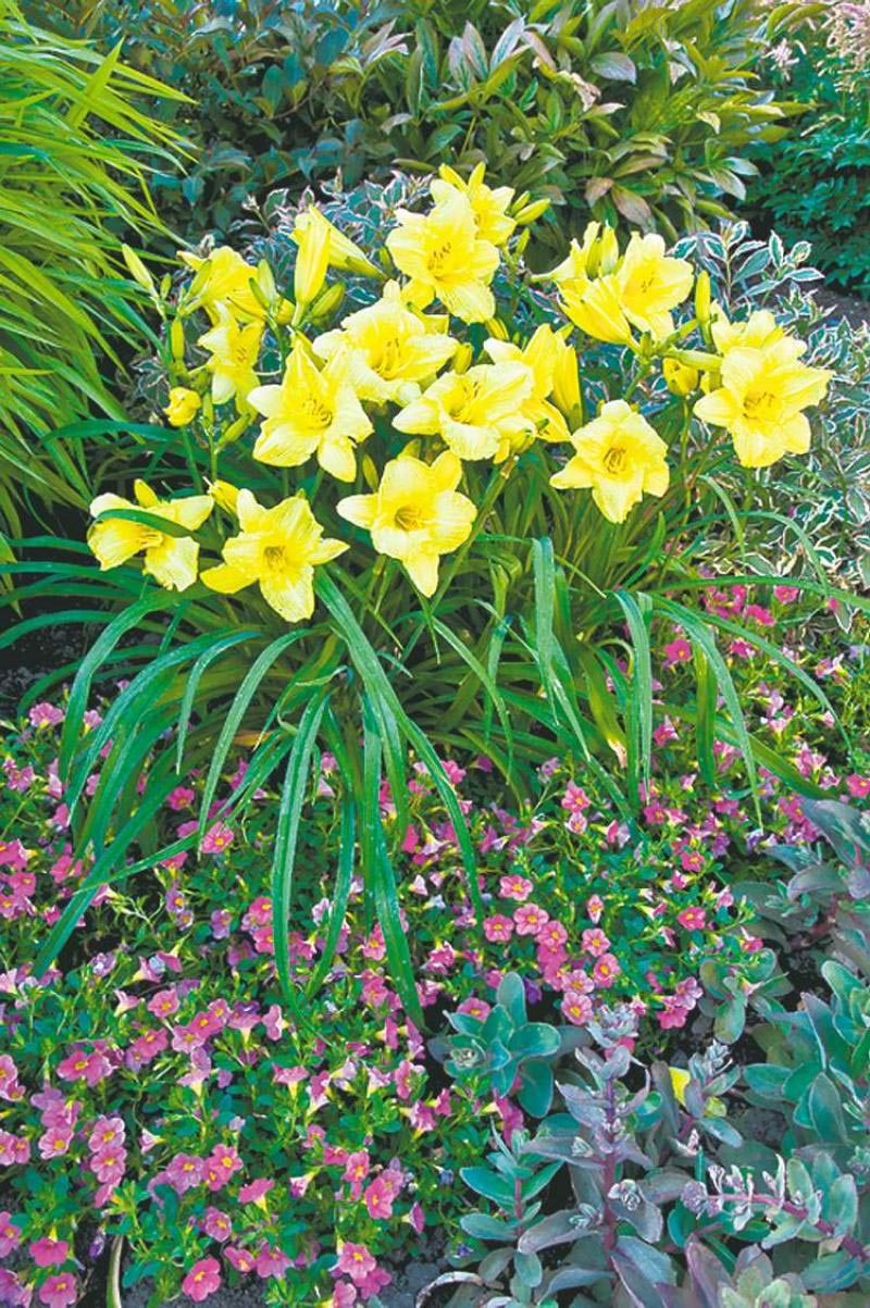 Perennial Flowers That Bloom All Summer Long Garden Design Ideas